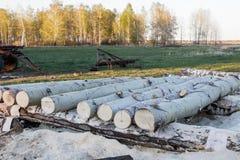 连续说谎在一个小锯木厂的亚斯本日志在乡下 在背景-春天森林中 免版税库存照片
