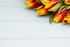 连续说谎在与地方的淡色背景的红色和黄色郁金香文本的 背景概念花春天空白黄色年轻人 平的位置,顶视图 免版税库存照片