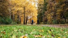 连续运动员在奔跑的公园在清早 几个孩子在做体育的森林跑 免版税库存照片