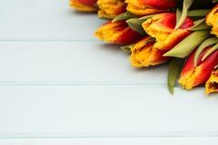 连续说谎在与地方的淡色背景的红色和黄色郁金香文本的 背景概念花春天空白黄色年轻人 平的位置,顶视图 免版税图库摄影