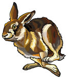 连续野兔 库存照片