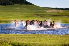 连续马在湖 免版税库存图片