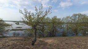 迟来的 春天 小山的森林在水位高的期间 股票视频
