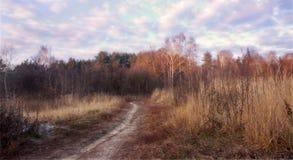 延迟秋天 通往对森林的道路 库存图片