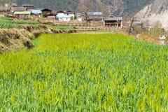 迪庆,中国- 2015年3月17日:麦田 一栋著名西藏别墅 免版税图库摄影