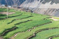迪庆,中国- 2015年3月17日:Cizhong村庄 著名西藏人v 图库摄影