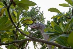 迪拜恐龙公园 免版税图库摄影