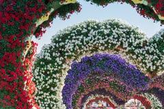 迪拜有百万朵花的奇迹庭院 免版税库存图片