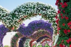 迪拜有百万朵花的奇迹庭院 免版税图库摄影