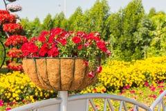 迪拜有百万朵花的奇迹庭院 库存照片