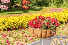 迪拜有百万朵花的奇迹庭院 免版税库存照片