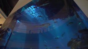 迪拜水族馆和在商城` s内部迪拜购物中心股票英尺长度录影的水动物园下 股票录像