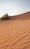 迪拜沙漠沙丘 库存照片