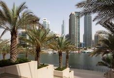 迪拜海滨广场棕榈树 免版税库存照片