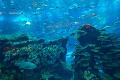 迪拜水族馆&水下的动物园在迪拜Mal 免版税库存图片