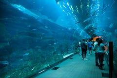 迪拜水族馆 免版税库存照片