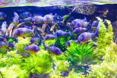 迪拜水族馆 免版税库存图片