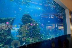 迪拜购物中心水族馆 免版税库存照片