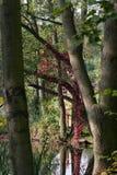 迪诺公园恐龙 库存照片