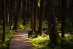 迷人森林道路 免版税图库摄影