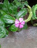 迷人的小的花在我们的家 免版税库存照片