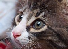 迷人的幼小猫 免版税库存照片