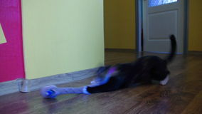 迷人的幼小猫 股票视频