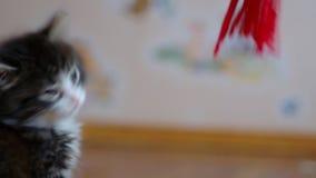迷人的幼小猫 股票录像