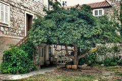 迷人的庭院在杜布罗夫尼克克罗地亚 库存照片