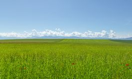 迷人的风景4 免版税库存照片