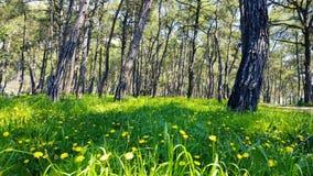 迷惑的春天-杉木森林05 股票视频
