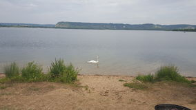 迷惑的湖,湖鸭子 免版税图库摄影