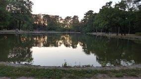 迷惑的湖,湖鸭子 免版税库存图片