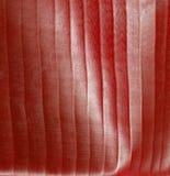 迷离红色stripey 免版税图库摄影