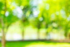 迷离绿色树室外公园庭院摘要 库存照片
