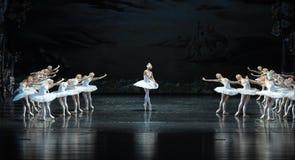 迷茫的天鹅这天鹅湖边芭蕾天鹅湖 免版税库存图片