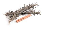 迷迭香和肉桂条两根小树枝在白色背景 免版税库存照片