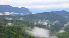 迷雾山脉在深森林里流经森林地小山timelapse的雾和云彩 影视素材