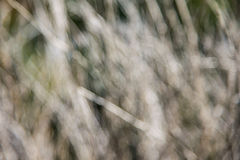 迷离干燥枝杈背景 库存图片