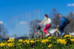 迷离无法认出的青年时期,乘驾自行车 春季,绿草草甸,黄色年轻蒲公英,拷贝空间 摘要 免版税库存照片