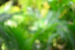 迷离椰子叶子 免版税库存照片