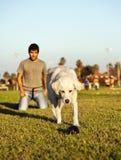 追捕嚼玩具的拉布拉多在公园 图库摄影