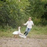 追捕在农场的鹅的一件白色毛线衣和牛仔裤的小女孩 生活方式画象 免版税库存照片