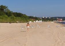 追捕在海滩的海鸥的男孩 库存图片