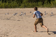 追捕在海滩的海鸥的男孩 图库摄影