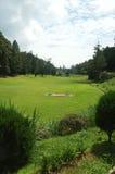 追猎阴沉的高尔夫球 库存图片