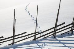 在雪的动物轨道 免版税库存图片