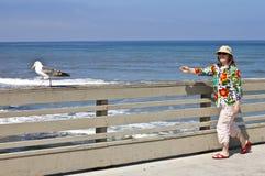 追逐在木板走道加利福尼亚的一只海鸥。 免版税库存照片