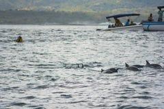 追逐海豚在印度洋 库存图片