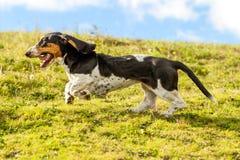 追逐牺牲者的狗 免版税库存照片
